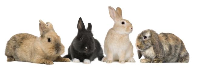 可爱小兔图片下载 小兔子