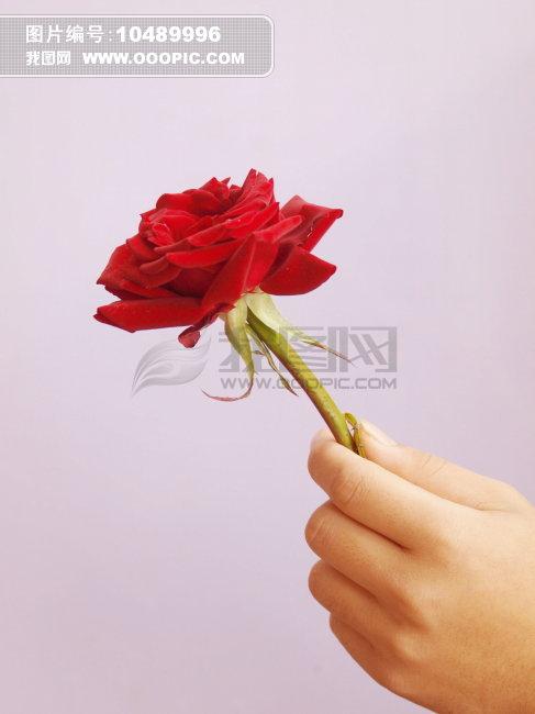 一朵花 一朵玫瑰花
