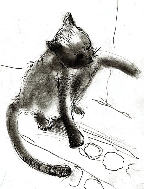 手绘素描猫猫