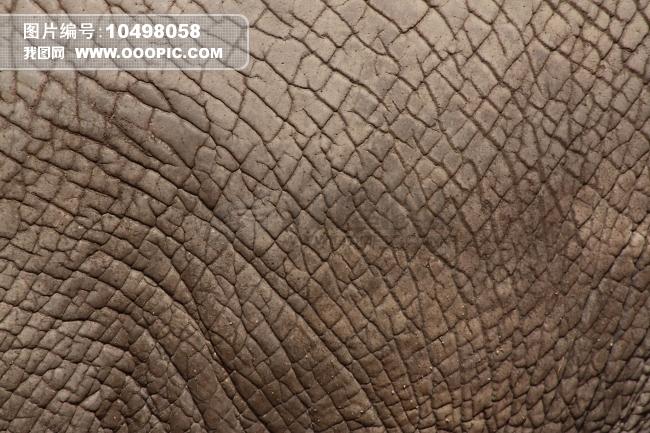 肌理壁纸动物贴图