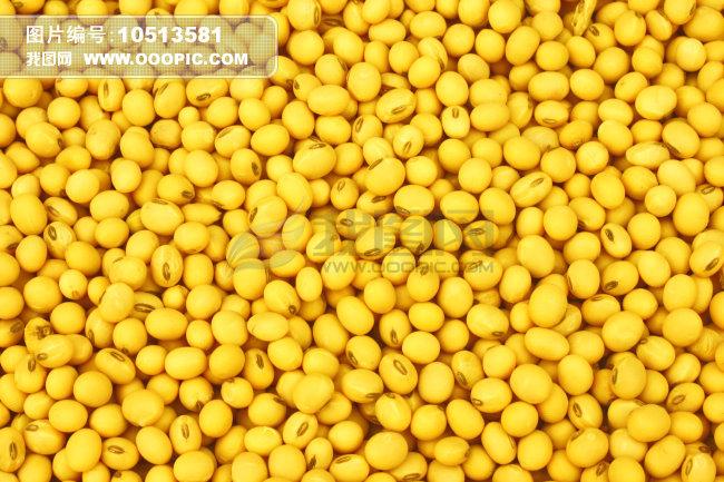 黄豆 豆子 毛豆子 植物