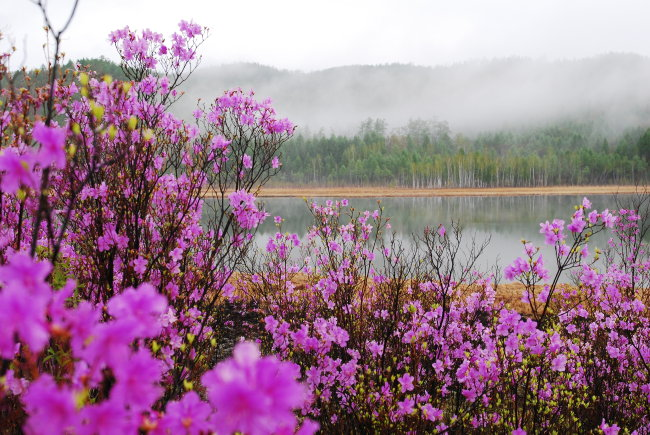 桃花风景图片下载