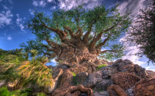 古老树木模板下载 古老树木图片下载 大树 树头 风景背景 树木 蓝天