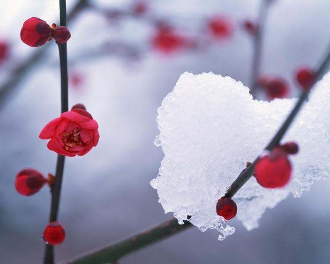 康之园 梅花鹿角图片大全 > 手绘梅花ppt背景图片  梅花雪高清图案