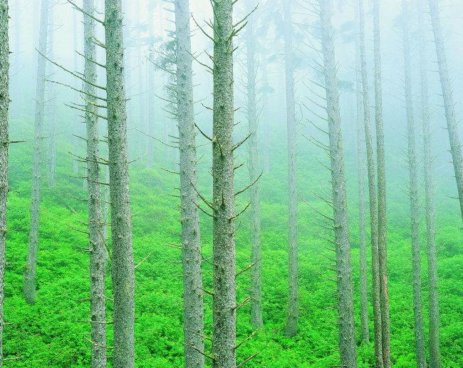 树木森林图片模板下载