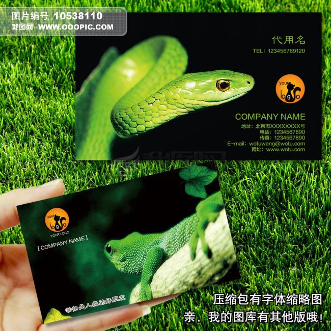 名片设计模板psd下载 爬行动物