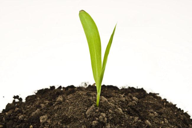 泥土中成长的植物图片