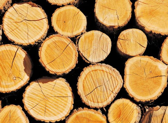 木头木纹模板下载 木头木纹图片下载