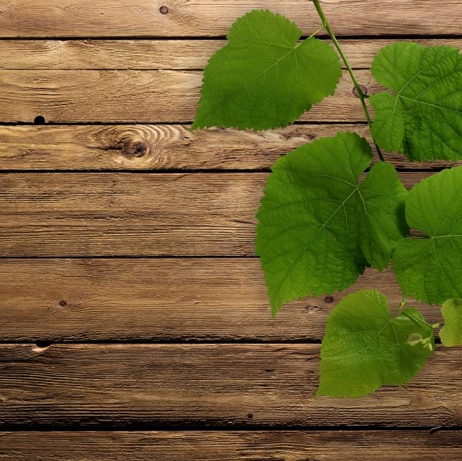 绿叶木板背景模板下载