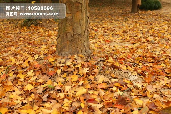 秋天落叶的景色_