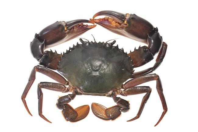 螃蟹高清图片