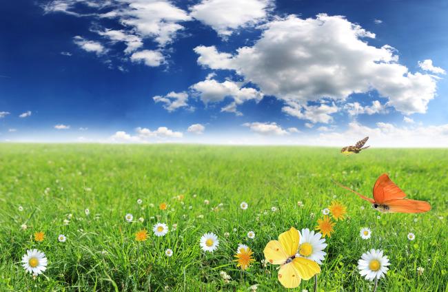清新淡雅的风景图片模板下载 10595296 自然风光 景物 风景