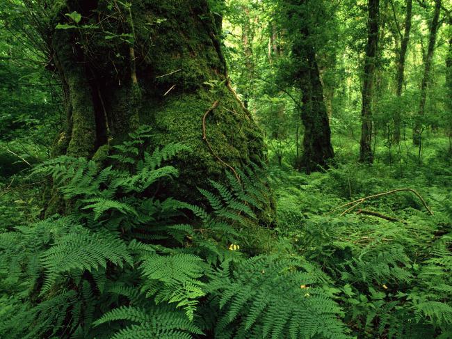 森林美景图片