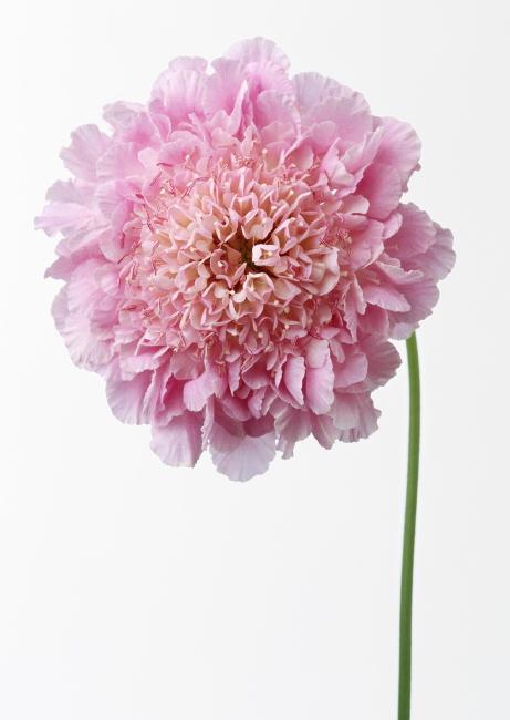 白底手绘粉色花卉壁纸