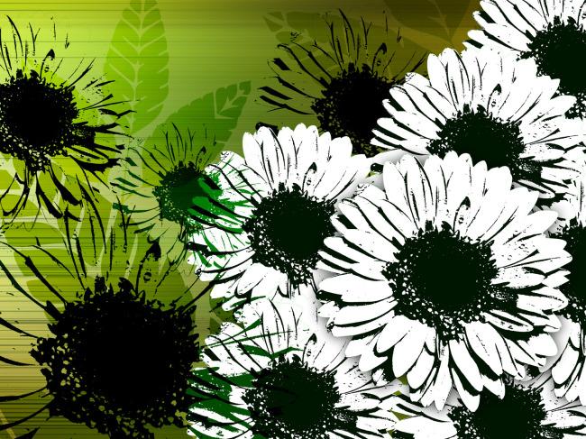 壁纸 花卉/[版权图片]白色菊花花瓣黑色花芯