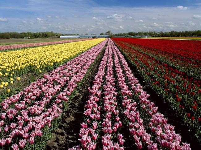 风景 素材/精美花朵草地风景素材