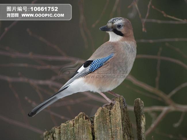 鸟类图片图片素材(图片编号:10661752)_动物图片库