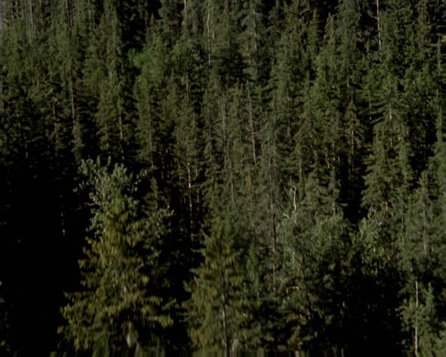 森林树木素材1图片下载