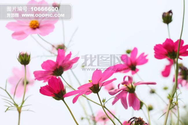小清新花朵背景素材_小清新花朵背景免费下载