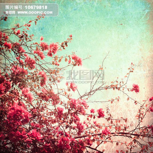 植物写生线条画梅花