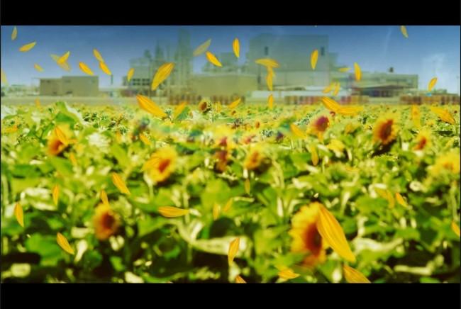 动态鲜花盛开的图片,盛开的鲜花动态图,鲜花盛开_点 ...