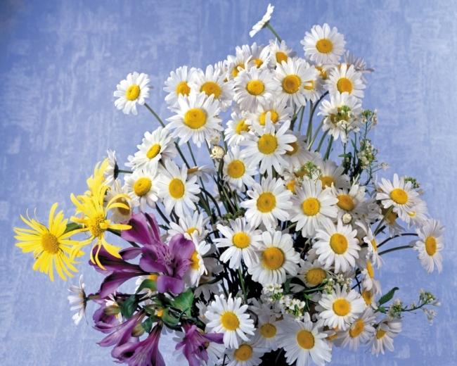 背景墙|装饰画 油画 风景油画 > 小雏菊 菊花 鲜花 花束 油画  下一张