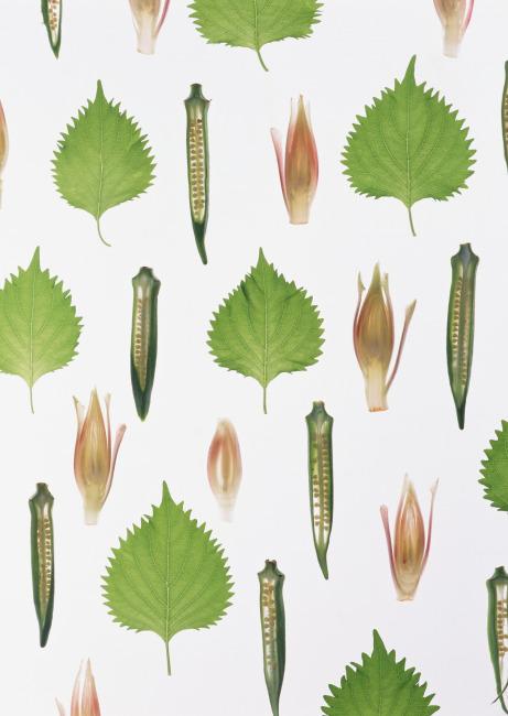 蔬菜拼图模板下载 蔬菜拼图图片下载 青椒图片 树叶 蔬菜拼图