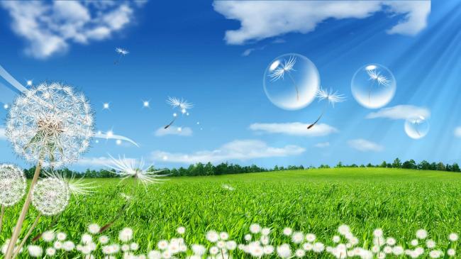 蒲公英气泡飘动风景动态视频背景素材下载