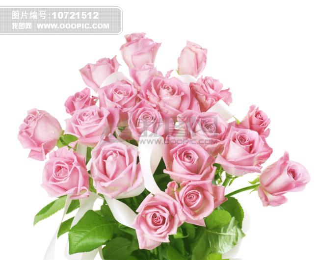 高清玫瑰花