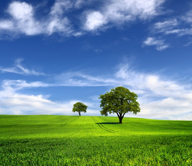 蓝天 草地 树木