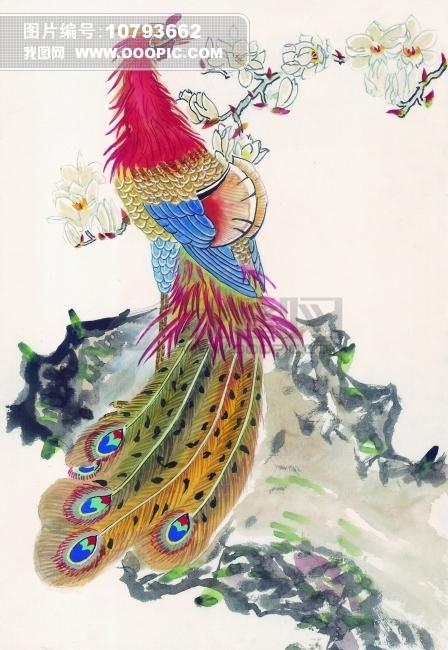 孔雀工笔画图片下载 国画 工笔画 中国画 装饰画 漂亮孔雀 野生动物