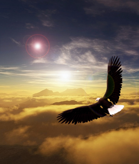 雄鹰展翅飞翔模板下载(图片编号:10803584)