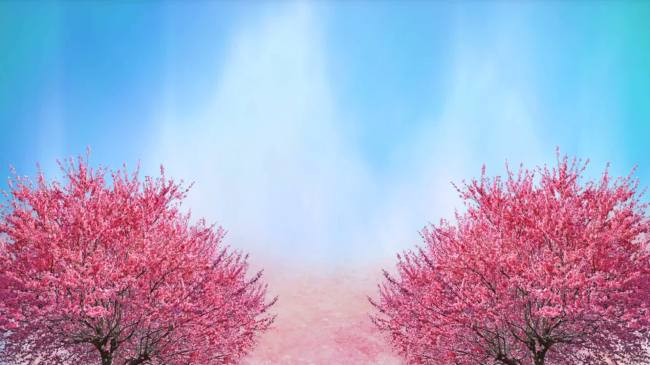 桃花红杏花白半仰拍角度桃林两侧缓缓涌来
