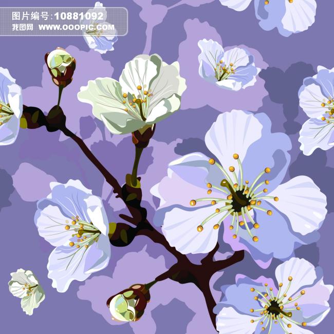 樱桃树枝花朵图片下载 樱桃 含苞未放 手绘 盛开 樱桃树枝花朵 树枝