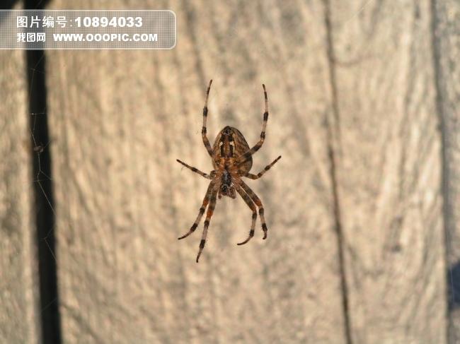 爬行昆虫图片素材(图片编号:10894033)_动物图片库