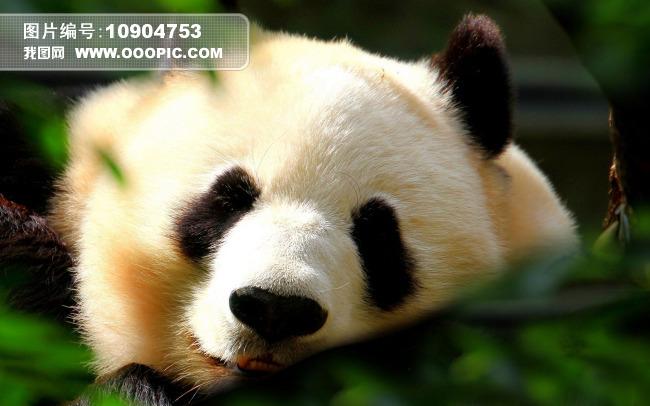 儿童简单水墨画大熊猫分享展示