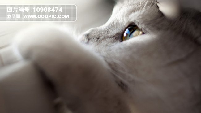 小猫 萌物 背景图片素材(图片编号:10908474)_动物库