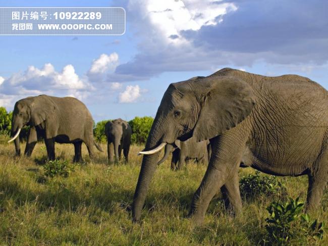 一群大象森林动物