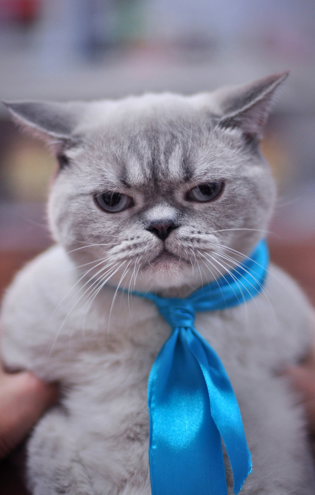 很可爱的猫gif