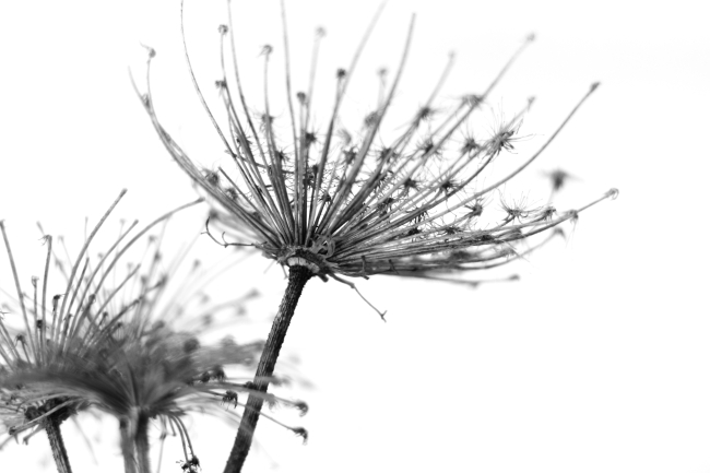 植物平面图例手绘黑白