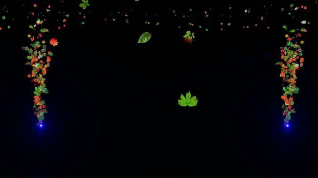 光处飘树叶