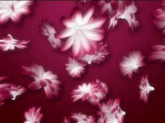 视频素材 动态视频素材 其他动态视频 > 花瓣飘落开机动画视频素材图片