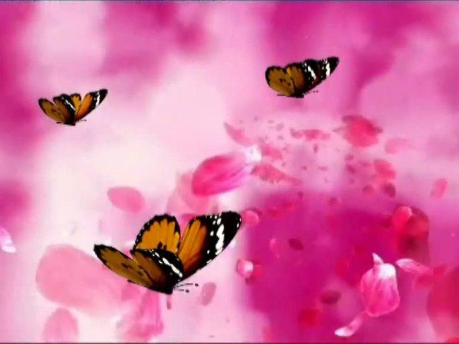 玫瑰花和蝴蝶动态锁屏图片