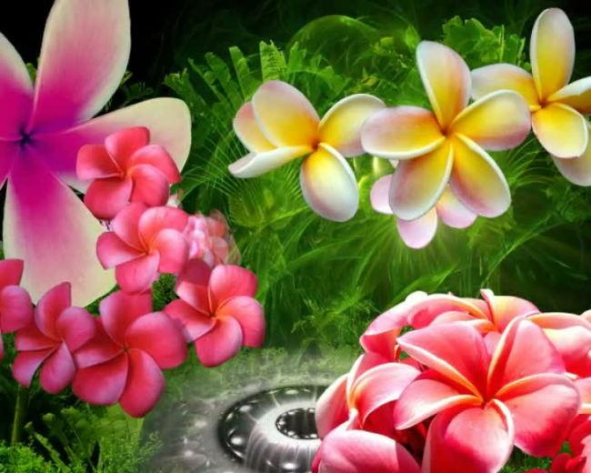 创意美丽花朵模板下载(图片编号:11012983)