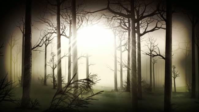 穿越森林视频制作动态背景素材