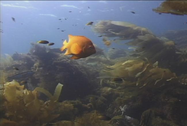 壁纸 动物 海底 海底世界 海洋馆 水族馆 鱼 鱼类 650_438