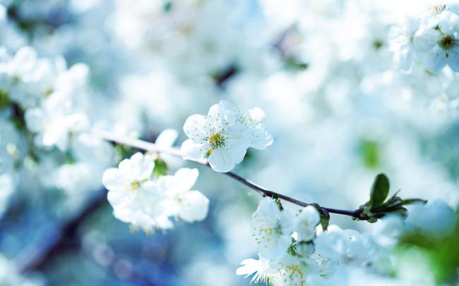 复古花欧式复古花花朵手绘手绘手绘花彩绘