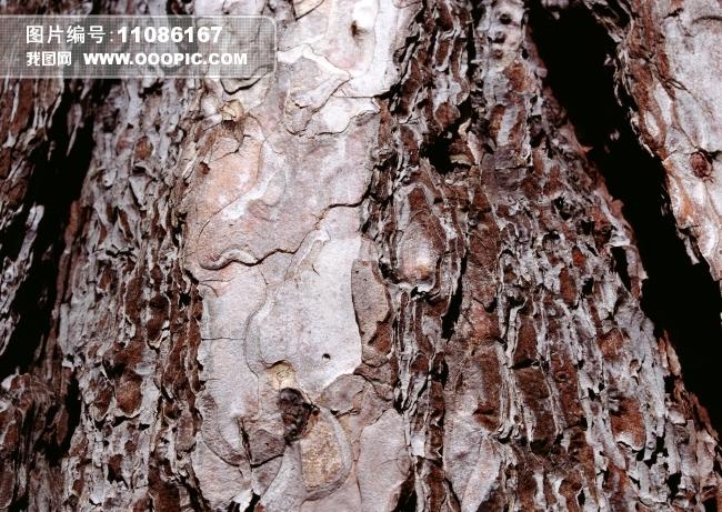 树皮纹理粗糙木材图片下载 树皮纹理 粗糙木材 树墩 树林 木质 木头