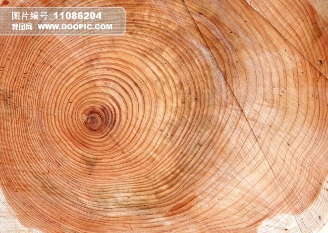 树墩 木纹 纹理 实木 肌理 木桩 树皮 木柴 年轮 环保 砍树 木头 砍树