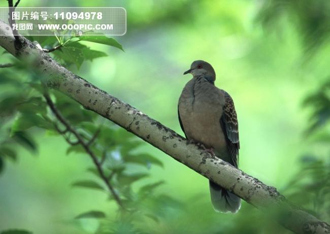 树枝 雀鸟 树枝上的小鸟 飞鸟 家禽 插画 飞禽 卵生动物 生物世界